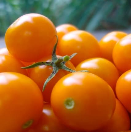 5 Colorful Types of Tomatoes - Ananas Noire Tomato (Black Pineapple Tomato)