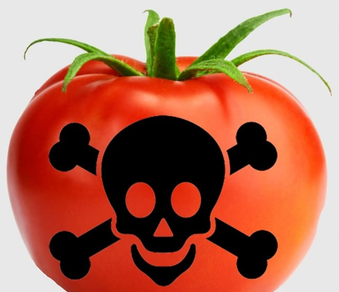 A tomato with the poison sign in the middle - History of Tomatoes
