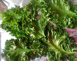Kale after being roasted for 25 seconds - Kale Salad