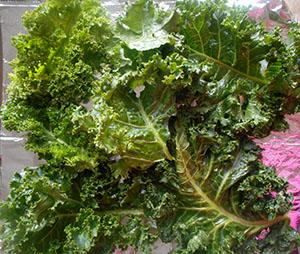 Kale leaves spread out on an aluminium foil - Kale Salad