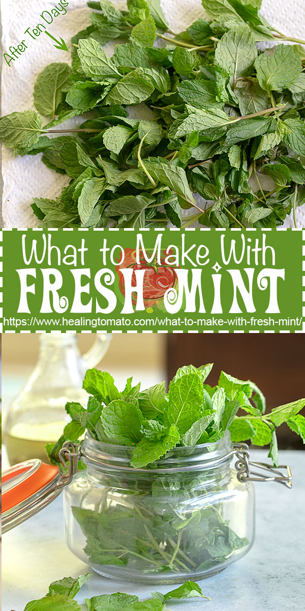 How to store and keep fresh mint and the best recipes to make using fresh mint @healingtomato