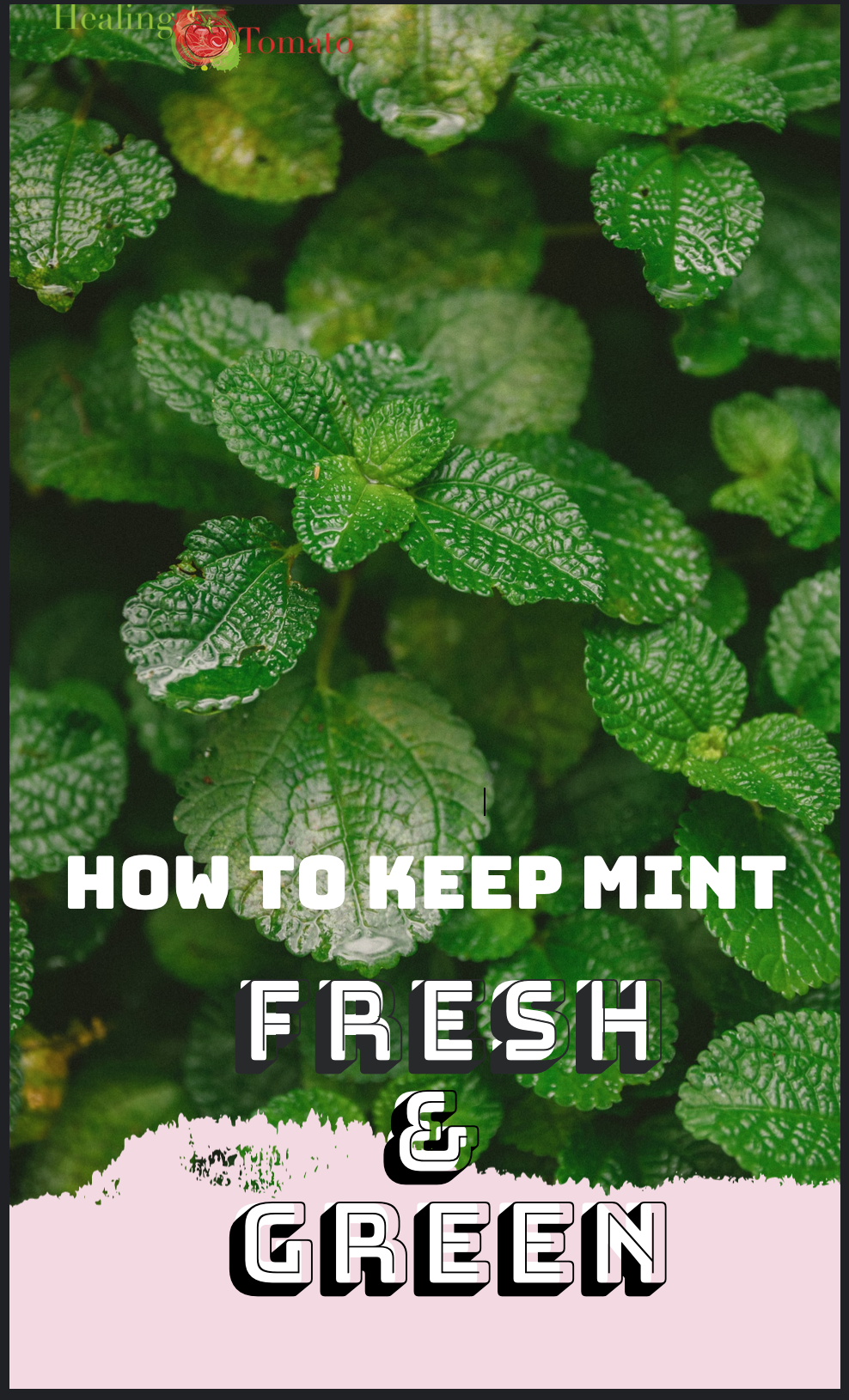 """Fresh mint in the background with the text overlay Saying """"How to keep mint fresh and green"""""""
